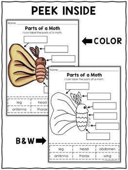 Vocabulary Activity - Parts of a Silkworm Moth