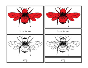 Parts of a Bumblebee (Three-Part Cards)
