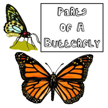 Parts of a Butterfly - Insect Anatomy for Biology or Science Classes