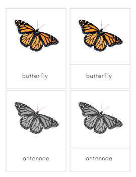Parts of a Butterfly 3-Part Nomenclature Cards- Montessori