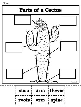 Parts of a Cactus