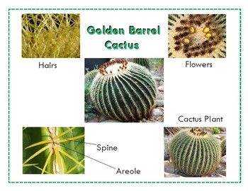Parts of a Cactus : Three Part Cards