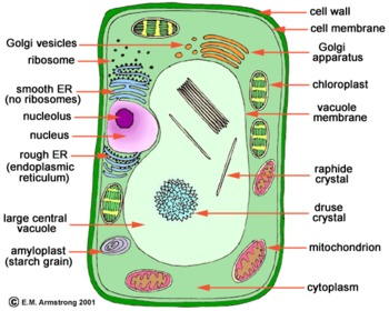 Parts of a Cell Food Lesson