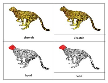 Parts of a   Cheetah - Montessori - Three Part Cards