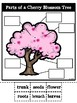 Parts of a Cherry Blossom Tree-Bilingual
