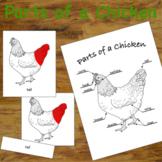 Parts of a Chicken/Hen - 3 Part Montessori Nomenclature Ca