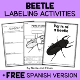 Parts of a Mealworm Beetle Activities