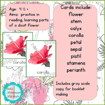Parts of a Dicot Flower Montessori 3 - Part Cards