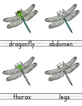 Parts of a Dragonfly, Montessori science 3-part cards