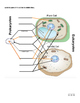 Parts of a Eukaryote Cell