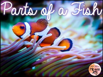 Parts of a Fish 3 Part Cards