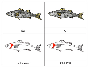 Parts of a Fish Three Part Cards