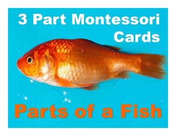 Parts of a Fish Montessori Three Part Vocabulary Cards - color and blackline