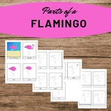 Parts of a Flamingo Summer Activity Three Part Cards Monte