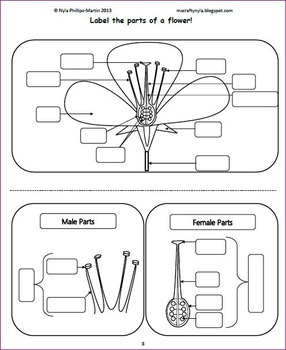 Parts of a Flower Activities -Worksheets -Flash Cards -Craft -Quiz - Word Wall