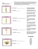Parts of a Flower Activity
