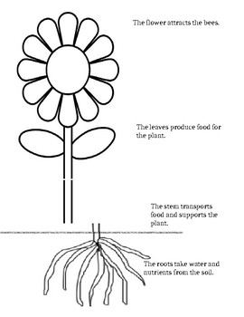 Parts of a Flower Booklet