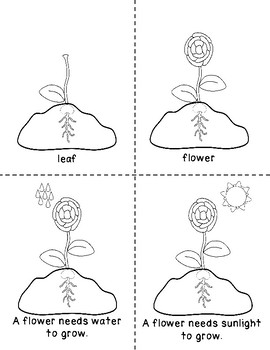 Parts of a Flower Coloring Booklet
