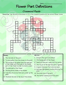 Parts of a flower crossword puzzle worksheet freebie by element of fun parts of a flower crossword puzzle worksheet freebie ccuart Image collections