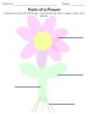 Parts of a Flower Diagram