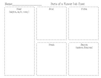 Parts of a Flower- Dissection Workmat