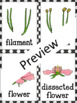Parts of a Flower Flash Cards