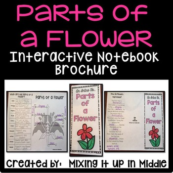 Parts of a Flower Interactive Notebook Brochure