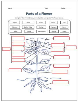 Parts of a Flower Labeling Science Worksheet by TechCheck ...