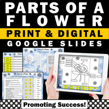 Parts of a Flower Activity Google Classroom Activities, Digital Notebook