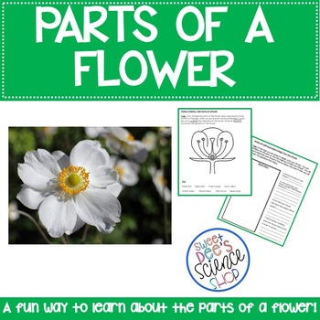 Parts of a Flower Learning Stations using Task Rotations