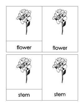Parts of a Flower Montessori 3-Part Cards