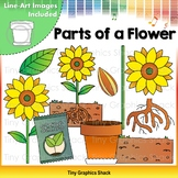 Parts of a Flower - Plant Clip Art