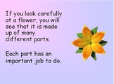 Parts of a Flower Power Point