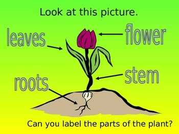 Parts of a Flower Powerpoint