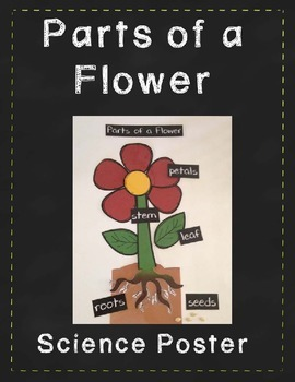 Parts of a Flower - Science Poster