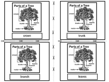 Parts of a Flower, Tree & Seed Vocabulary Cards