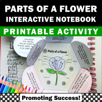 Parts of a Flower Foldable, Science Interactive Notebook, Plant Unit