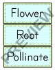 Parts of a Flower Word Wall pack