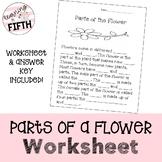 Parts of a Flower Worksheet