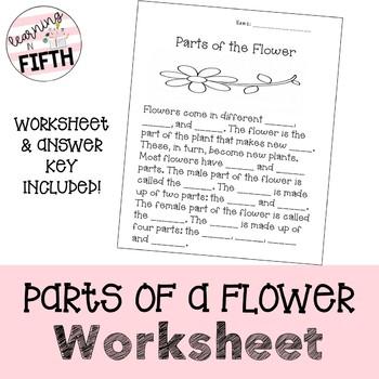 Parts Of A Flower Worksheet Teaching Resources | Teachers Pay Teachers