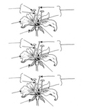 Parts of a Flower reproducible diagram