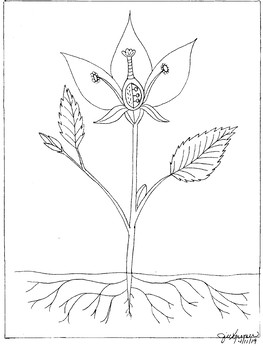 Parts of a Flowering Plant Coloring Page