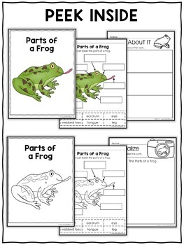 Vocabulary Activity - Parts of a Frog