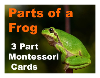 Parts of a Frog Montessori Three Part Vocabulary Cards - color and blackline