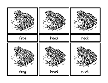 Parts of a Frog Montessori Three Part Vocabulary Cards - color and blackline