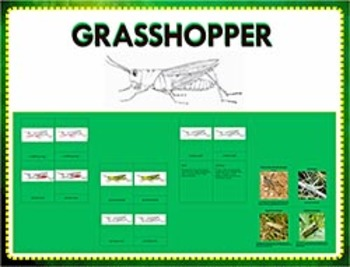 Parts of a Grasshopper : Three Part Cards