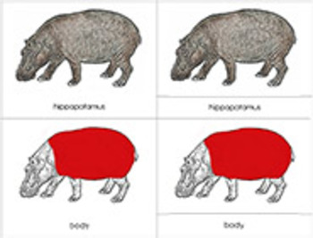 Africa:Parts of a Hippopotamus