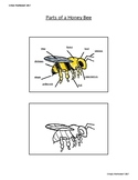 Parts of a Honey Bee