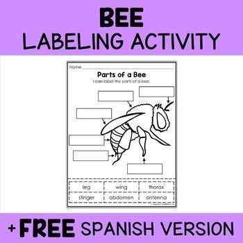 Parts of a Honey Bee Activity