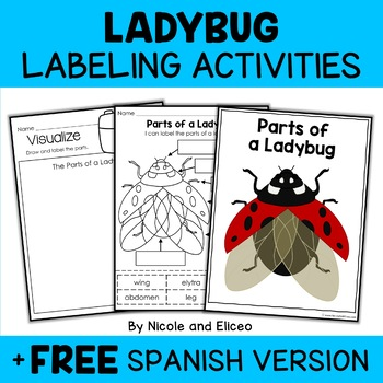 Parts of a Ladybug